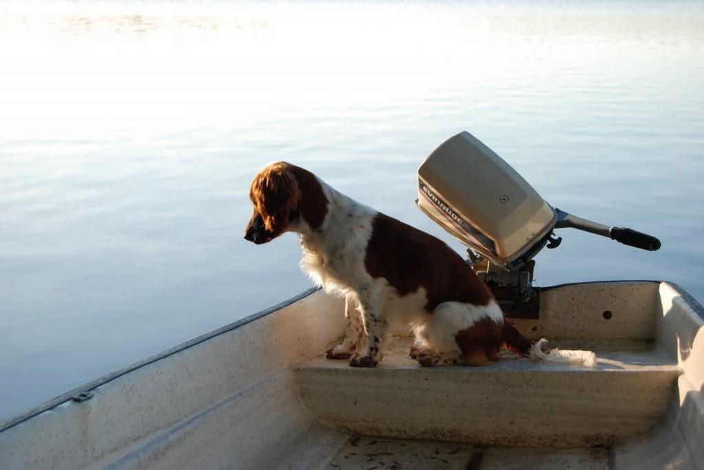 Hund-i-båt-med-snurra
